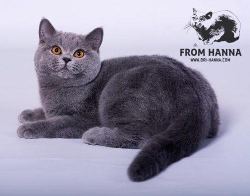 luxury_loki_of_hanna_kitten