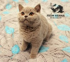 luxury_orion_of_hanna_cat