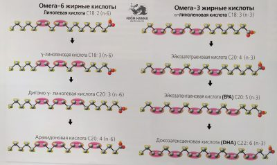 sintez-v-pecheni-omega-6-i-omega-3