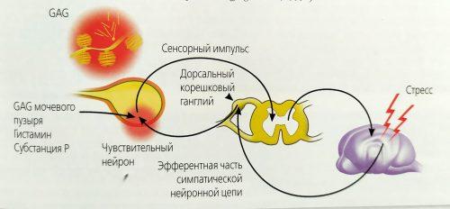 skhema-izmenenija-u-koshek-pri-idiapaticheskom-sistite