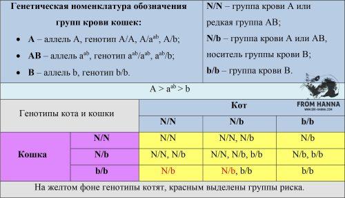 vidy-nruppy-krovi-kota-koshek-genotipy-gruppa-krovi-kotjat